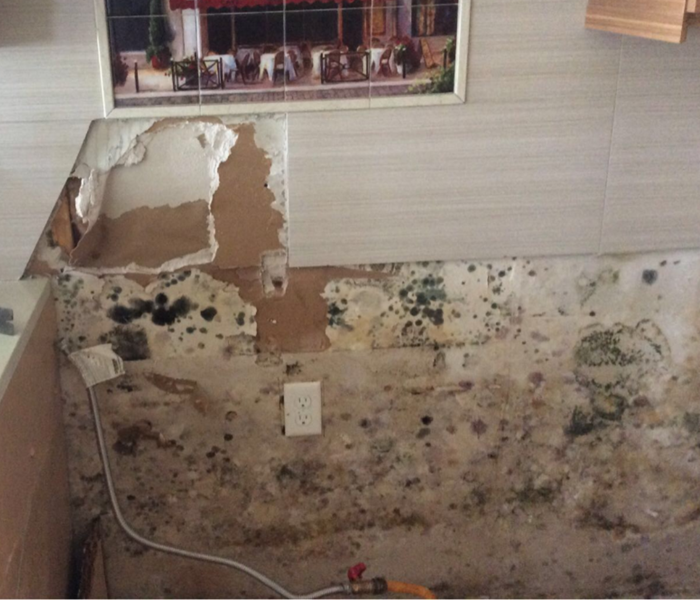 Mold discovered after a storm