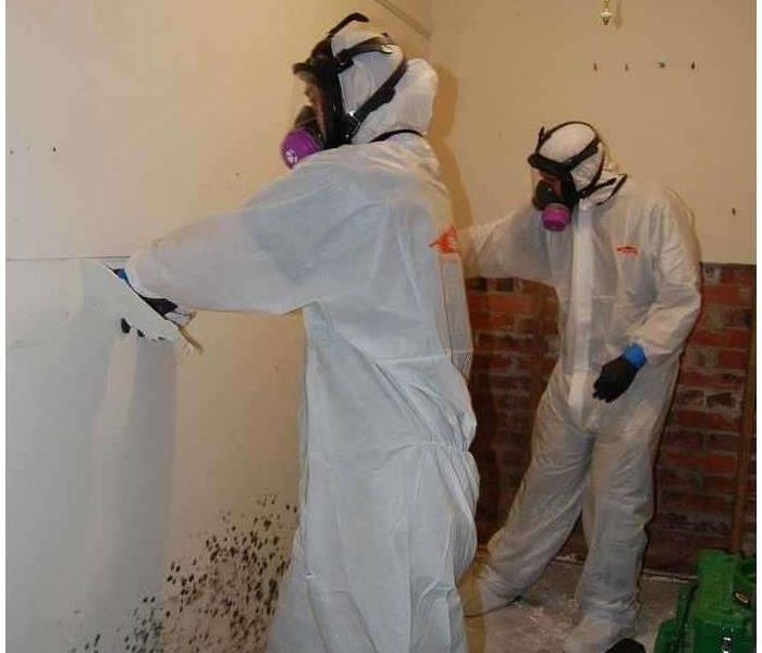 Mold Remediation Understanding Mold Remediation - Steps 4 through 7